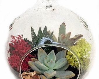 """Round Hanging Succulent Terrarium Kit - Great Gift! - Easy to Grow - 5"""" Glass"""