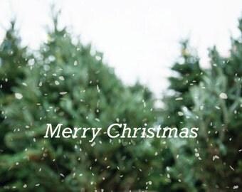 Christmas Art, Christmas Photo, Christmas Tree 2