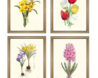 "Botanical print set. Spring flowers. Easter. Wall Art. Daffodil. Tulip. Crocus. Hyacinth.  5x7"" 8x10"" 11x14"""