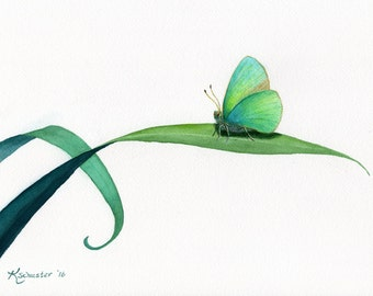 "Hawaiian Koa Butterfly watercolor  print 10 X 15"""