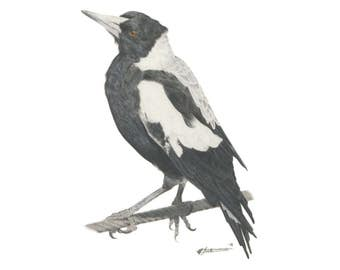 Magpie - Illustration Print