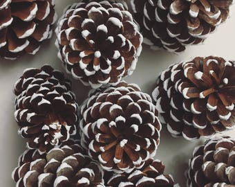 White Pinecones 12 Paint Tipped Snow Frosted - Home Decor Centerpiece - Holiday Christmas Tree Decor - Nature Upcycle Rustic Wedding Decor