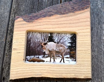 handmade photo frame / caribou photo / cabin decor / 4 x 6  rustic picture frame / live edge / anniversary gift /  country wall hanging.