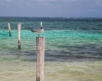 Bird on the Ocean Post Photograph