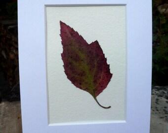 Real Pressed Flower Fern Leaf Botanical Art Herbarium Oak Leaf Hydrangea Leaf 3x5 OR 5x7