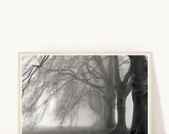 Tree Art Print, Tree Print, Tree Photo, Black and White Photography,  Printable Art, Nature Print, Minimalist poster, Instant download