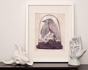 Raven Taxidermy  - A4 Art Print - International Postage