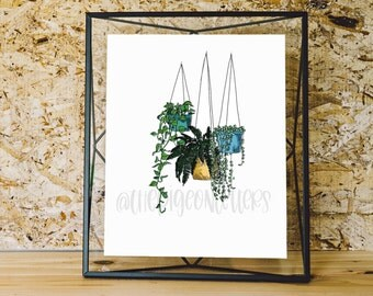 Hanging House Plants Illustration | Fern | String of Pearls | Philodendron | Botanical Line Drawing | Ivy