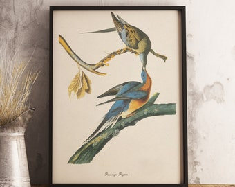 Passenger Pigeon Print:INSTANT DIGITAL DOWNLOAD Bird print, Antique Bird Painting