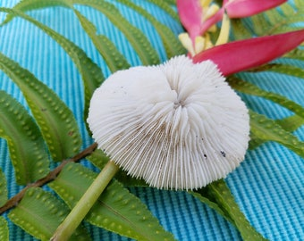 Plate Coral   Natural Bleached Coral   White Coral   Sea Decoration   Beach Decor   Bungalow Decor