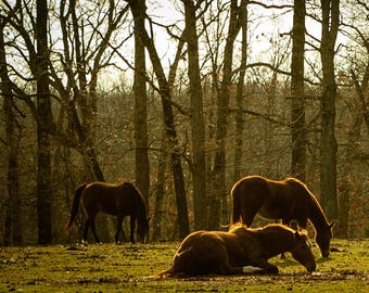 Horses at Sundown