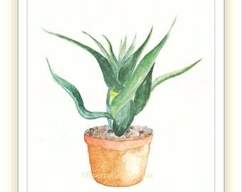 Aloe Vera Plant Etsy