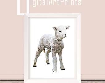 Poster Sheep Poster Lamb Print Baby Farm Animal Cute Baby Sheep Print Lamb Printable Lamb Download Lamb digital Download Sheep download