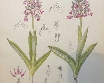 Vintage Botanical Print - Pink Orchids