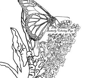 Butterfly Coloring Page Adult Book Pages Printable