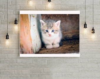 Kitten blue eyes, stable cat, pet art home décor photography download, savage kitty outside digital illustration, decoration, majorie