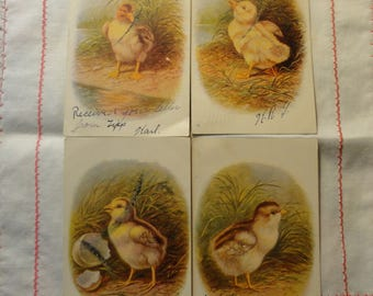 Antique Ducklings Chicks Postcards, set of 4, post marked 1906