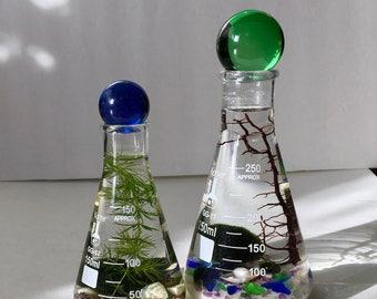 Live Marimo Balls in 2 Science Beaker Flasks with Spheres Zen Pet Mini Aquarium / Terrarium