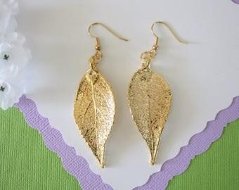 Gold Leaf Earrings, Evergreen Leaf , Real Leaf Earrings, Real Gold Evergreen Leaf, Gold, Nature, LEP58