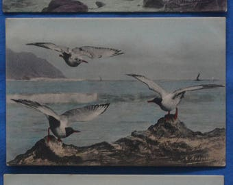 Lot of 3 Seagulls Ocean UDB Postcards Artist Signed Andreossi 1904
