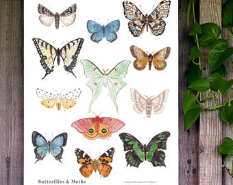 Butterflies and Moths 13 x 19 Poster - Entomology, Montessori, Educational, Natural History, Lepidoptera, Insects, Nature Study