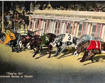 Vintage Florida Postcard - Greyhound Racing at Night, Miami (Unused)