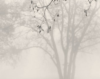tree photography, trees in fog, landscape photography, trees in fog, black and white photography, minimalist photography