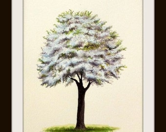 Cherry Blossom Tree Watercolor Painting