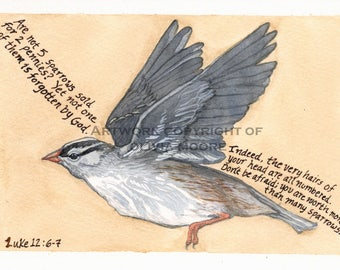"Christian Bible Verse Art Print - Encouraging Scripture from Luke 12:6-7 with a White Crowned Sparrow Illustration - 8 1/2"" x 11"""