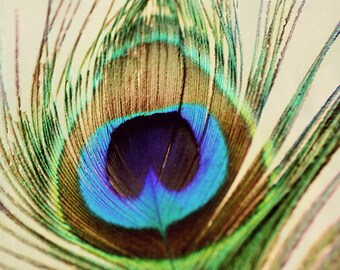 Feather Photography- Peacock Feather Photograph, Green Blue Brown Teal, Feather Wall Art, Peacock Feather Print, Single Feather Photo
