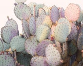 Pink Cactus Fine Art Photograph - Purple Prickly Pear