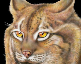 Lynx Colored Pencil Drawing
