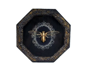 Cicada taxidermy / real golden cicada / insect frame art wall hanging decor shadow box framed insects bugs weird taxidermy