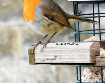 Robin Print, Wildlife Print, Nature Photograph, Color Photograph, Bird, Award Winning, A4 or A3 Size