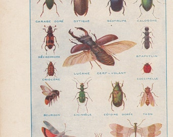 1950 Illustration Insects, original board, lucan, ladybug, bumblebee, bug, wall decoration.