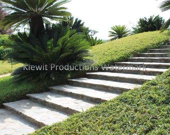 Japanese Garden - Stairs