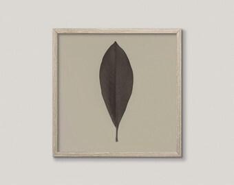 NATURE WATCH NO.5 | Minimalist nature photo | botanical art print | leaf art print | plant macro photography | rustic decor | green, taupe