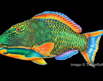 Parrotfish Colored Pencil Drawing