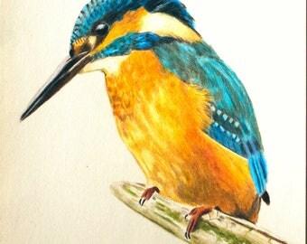 Original Kingfisher Colored Pencils Art