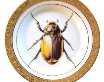 Vintage - Illustrated - Plate - Upcycled - Wall Display - China - Bug - Insect - Altered - Antique - Plate
