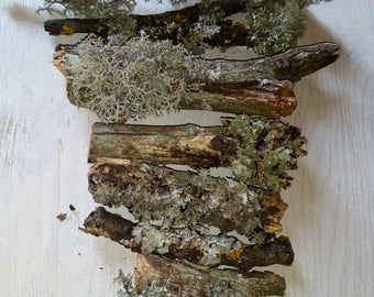 Mossy branches, wood with moss, natural twigs, cut branches, grey mossy branches, 10 pcs