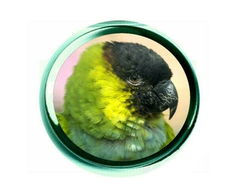 Nanday Conure Glass Paperweight (PG-0762)