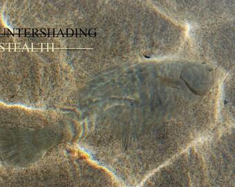 Countershading-Stealth Digital