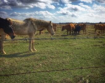 """Texas Scenery - Aluminum Prints 12"""" x 12"""" (Rustic, horses, cows, farm)"""