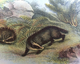 1896 Badger Antique Print, Mounted, Matted & Ready to Frame