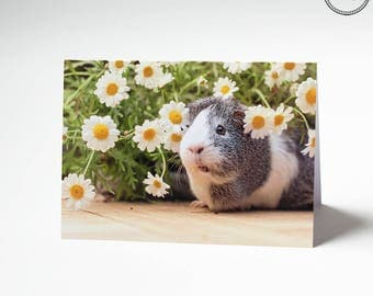 Mieps the guinea pig Daisies flower Greeting Card (1 card)