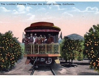 California - Riding the back of the caboose on the Limited while it passes through the Orange Groves - 1920s  -  Vintage Postcard
