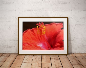 Hibiscus Photograph, Hibiscus Wall Art, Red Flower Photo, Tropical Flower Wall Art, Large Flower Print, Floral Art Print, FREE SHIPPING