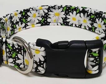 dog collar, black daisy, daisy, daisies, daisy dog collar, daisy collar, female dog collar, female collar