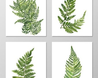 Fern art - Set of 4 art prints 8x10. Fern wall art.Fern picture.Botanical art.Botanical prints wall art. Nature art botanical.Nature art.